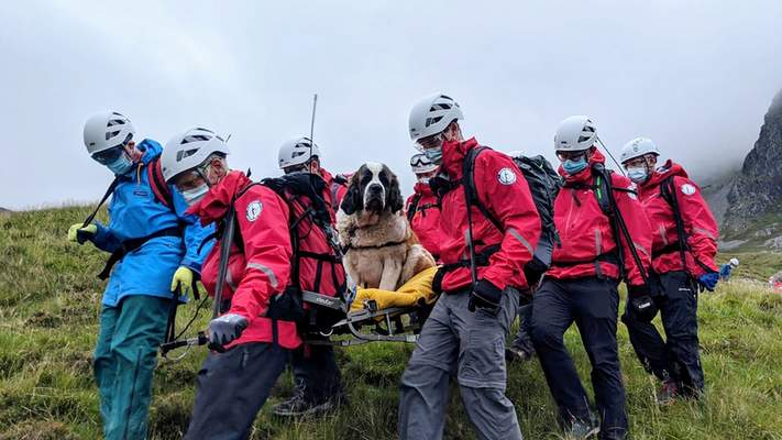 Associated Press Mountain rescue volunteers take turns carrying Daisy, a 120-pound St. Bernard, down Scafell Pike in northwestern England on Sunday after the dog collapsed and refused to move during a hike with her owners on England's highest peak.