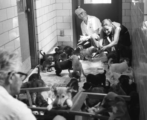 July 31, 1970: The Fort Wayne Humane Shelter had more than 40 dogs and puppies available for adoption. It had never had so many puppies at one time.
