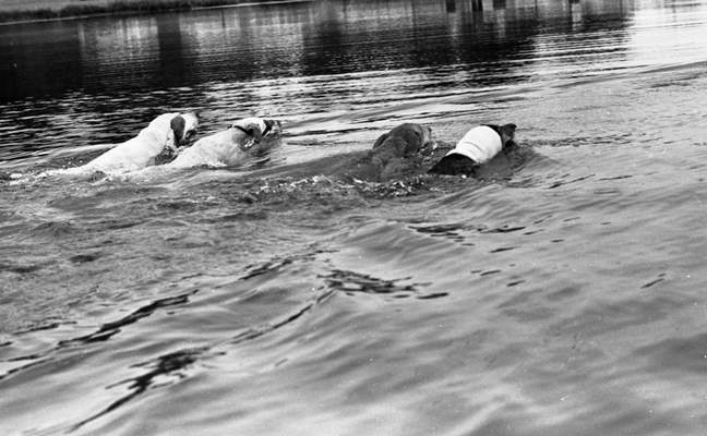 """""""Coon dog water racing"""" was among demonstrations at a discussion for pond owners and people thinking of building ponds July 29, 1970."""