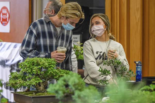 Show Goes On For Bonsai Club Local The Journal Gazette