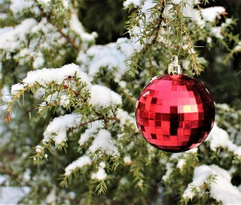 Pixabay Hanging heavy ornaments on a tree could break branches and cause damage to the tree.