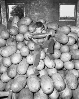 July 30, 1959: Jackie Newberry samples one of the 400 watermelons and 200 cantaloupes provided as a starter for Harlan Days. (Journal Gazette file photo)