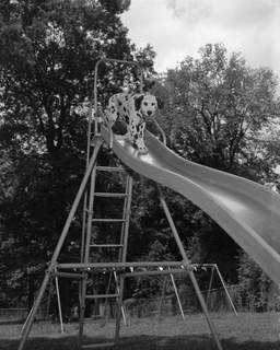 July 13, 1959: Banjo the dog stands on a slide at Fort Wayne State School Day Camp at Round Lake. (Journal Gazette file photo)