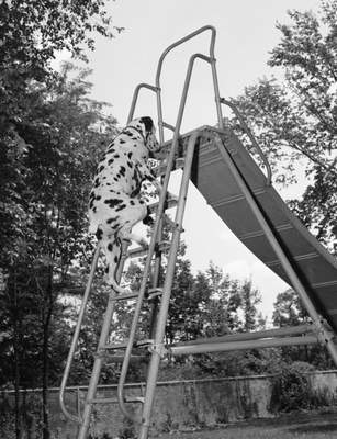 July 13, 1959: Banjo the dog climbs a slide at Fort Wayne State School Day Camp at Round Lake. (Journal Gazette file photo)