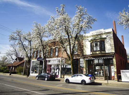 Photos by Katie Fyfe | The Journal Gazette Callery pear trees stand in pale bloom Wednesday morning along Broadway near Washington Boulevard downtown. The white, five-petaled flowers, about an inch in diameter, are produced abundantly in early spring, before the oval, dark green leaves fully expand. The fast-growing and resilient species, native to Asia, has been popular with landscapers for decades, but it is also considered an invasive species for its tendency to crowd out native plants in wild settings.