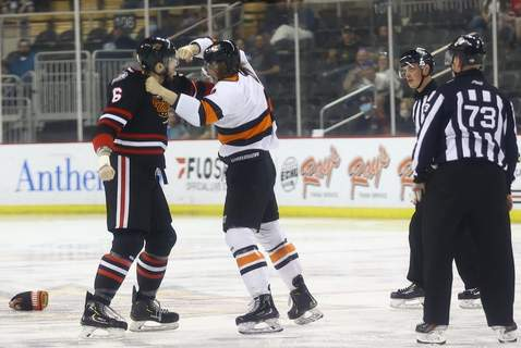 Whiteshark Photography 