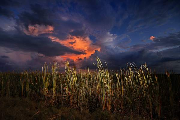 FILE - In this Oct. 20, 2019 photo, a clearing late-day storm adds drama in the sky over a sawgrass prairie in Everglades National Park in Florida. (AP Photo/Robert F. Bukaty, File)