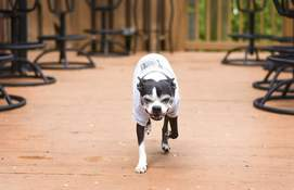 Katie Fyfe | The Journal Gazette Curly's Village Inn is among the patios with Humane Fort Wayne's Paw Friendly designation.
