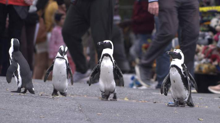 Netflix  Penguin Town is streaming now on Netflix.