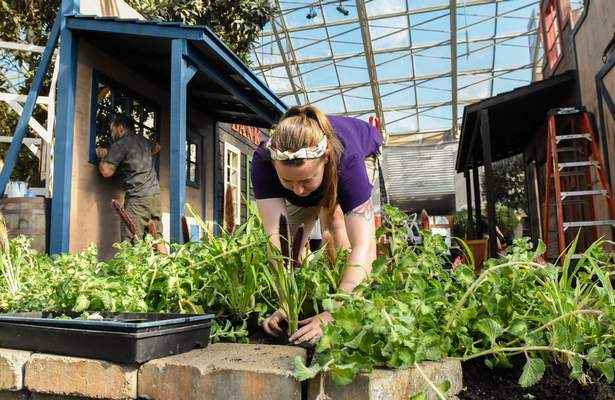 Michelle Davies   The Journal Gazette Meghan Wilhelm, seasonal gardener with Fort Wayne Parks and Recreation, plants millet along Main Street for Visions of the Old West, the new garden exhibit at Foellinger-Freimann Botanical Conservatory. The exhibit opens Saturday and runs through Nov. 14.
