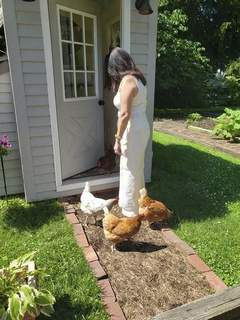 Niki Kelly | The Journal Gazette Chickens greet first lady Janet Holcomb outside their coop, which was built last year at the governor's residence.