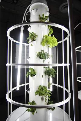 Katie Fyfe | The Journal Gazette  Hydroponic systems are placed throughout the Boys and Girls Club so students can learn about the science behind plants.