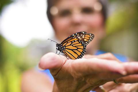 Katie Fyfe | The Journal Gazette Family and close friends of the late Codi McCann came together to mark what would have been his 27th  birthday with a butterfly release in his honor Saturday.