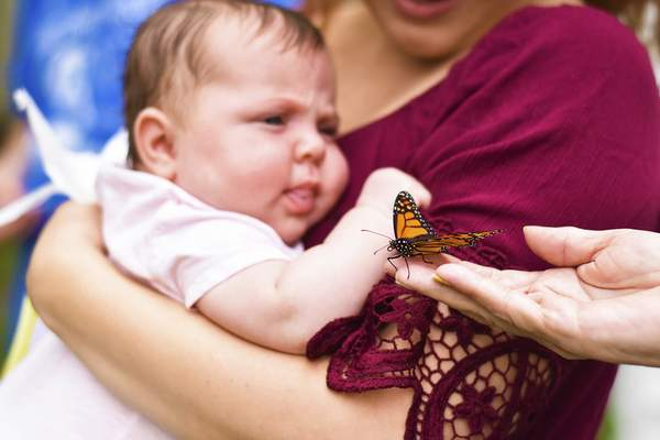 Katie Fyfe   The Journal Gazette Audie Harz, 2-months-old, watches a butterfly release for Codi McMann on Saturday.