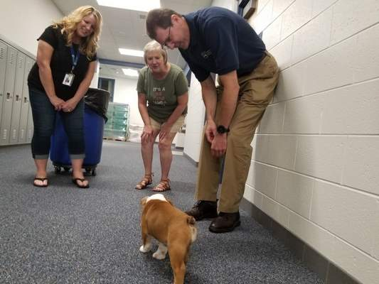 Courtesy Northwest Allen County Schools  Fourth grade teachers Brandy Scrogham, left, and Carey Charlton, center, join Superintendent Chris Himsel in greeting Moxie, a bulldog, to Aspen Meadow Elementary School on Wednesday.Carroll Middle School teacher Jill Sidebottom brought the pup to the newest Northwest Allen County school for a visit because its mascot is a bulldog.