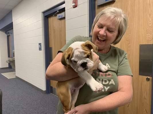 Ashley Sloboda | The Journal Gazette Carey Charlton, a fourth grade teacher at Aspen Meadow Elementary School, plays with Moxie on Wednesday.Carroll Middle School teacher Jill Sidebottom brought the pup to the newest Northwest Allen County school for a visit because itsmascot is a bulldog.