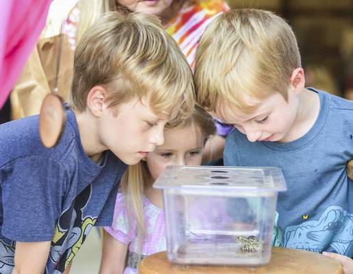 Katie Fyfe | The Journal Gazette Marlow Folkemer, 3, Eliza Folkemer, 3, and Atticus Folkemer, 9, look at a frog during the Monarch Festival at Eagle Marsh on Sunday.