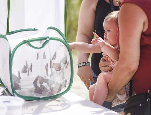 Photos by Katie Fyfe | The Journal Gazette Sophia Roe, 1, looks at monarchs before their release during the Monarch Festival on Sunday at Eagle Marsh Nature Preserve.