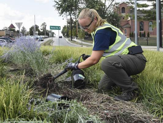 Michelle Davies | The Journal Gazette Michelle Peterson, with the right-of-way division of Fort Wayne Public Works, plants Russian sage on the roundabout at Auburn and Wallen roads on Tuesday afternoon.