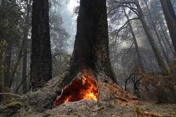 FILE - In this Aug. 24, 2020, file photo, fire burns in the hollow of an old-growth redwood tree in Big Basin Redwoods State Park, Calif. (AP Photo/Marcio Jose Sanchez, File)