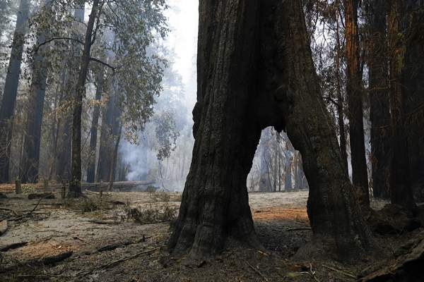FILE - In this Aug. 24, 2020, file photo, a redwood forest smolders in Big Basin Redwoods State Park, Calif. (AP Photo/Marcio Jose Sanchez, File)