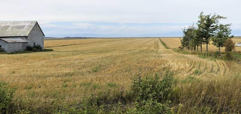 A field of grain stretches to the St. Lawrence River from a quiet country road outside Kamouraska, Quebec, on Sept. 9, 2021. (AP Photo/Calvin Woodward)