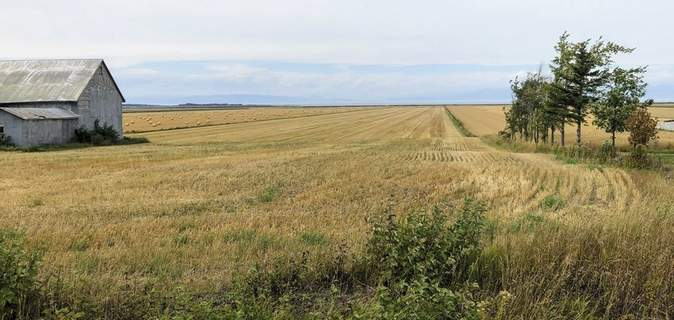 Crossing into Canada A field of grain stretches to the St. Lawrence River from a quiet country road outside Kamouraska, Quebec, on Sept. 9, 2021. (AP Photo/Calvin Woodward) (Cal Woodward STF)