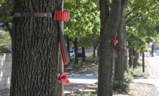 Michelle Davies   The Journal Gazette Ribbons encirle trees along Clinton Street for National Day of Remembrance for Murder Victims.
