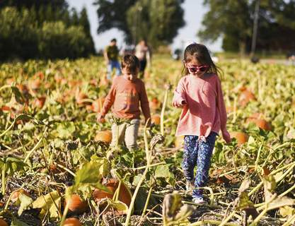 Katie Fyfe | The Journal Gazette Phillip Handlin, 4, and Tamsyn Greene, 6, look for pumpkins  at the u-pick pumpkin patch at Advance Tree Technology in New Haven.