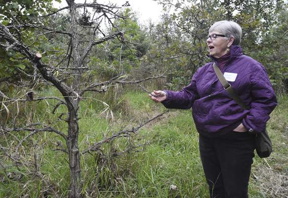 Rachel Von | The Journal Gazette  Kathleen Silliman notices a Bur Oak during a short hike at Eagle Marsh during the Frogapalooza event on Saturday September 29th, 2018. The event included short hikes, drinks, dinner, bidding on auction items, and a bonfire.