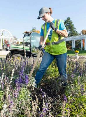 Michelle Davies | The Journal Gazette Nicole Roth, a gardener at Lakeside Park for 18 years, works her last day in the rose gardens before moving on to a new position at Lawton Park.