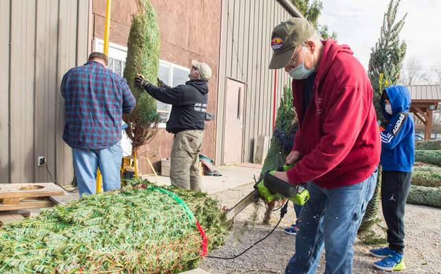 Michelle Davies | The Journal Gazette Dick Wolfe, committee member of St. Vincent Scouts, trims Christmas trees in preparation for opening for the season Friday.